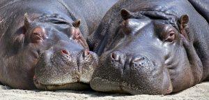 HIPAA hippo sign language interpreters
